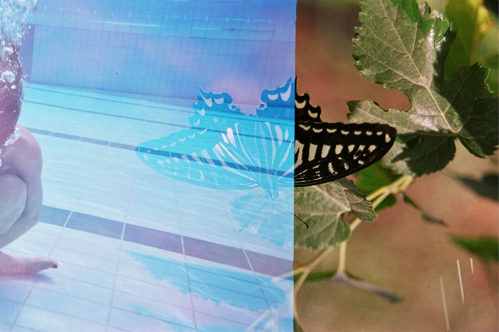 BW butterfly 2008